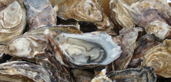 oesters-11