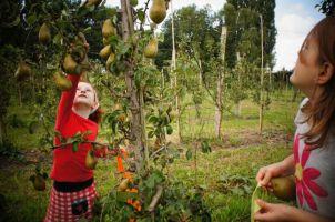 fruittuin-van-west