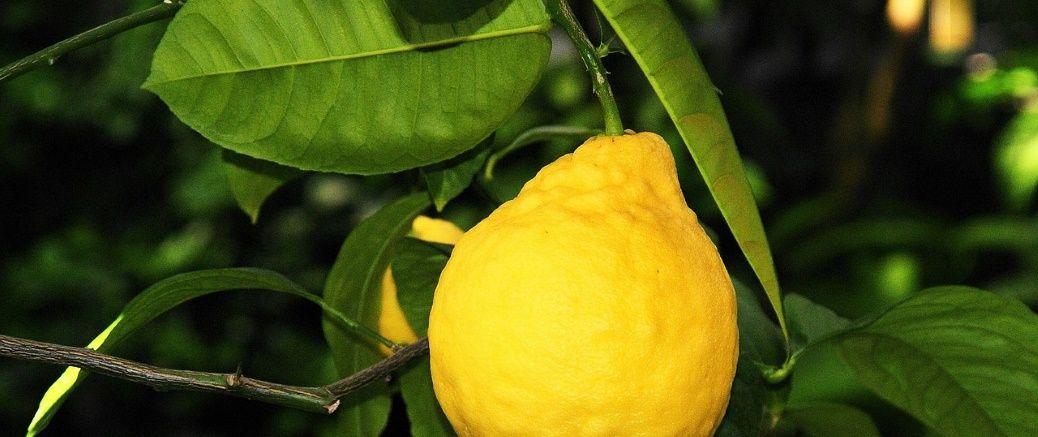 citroen-wide