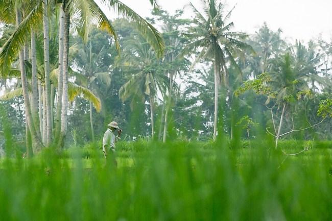 Ubud-Bali-Rice-Paddies-Bali-Monica-Dart-Photography-7272