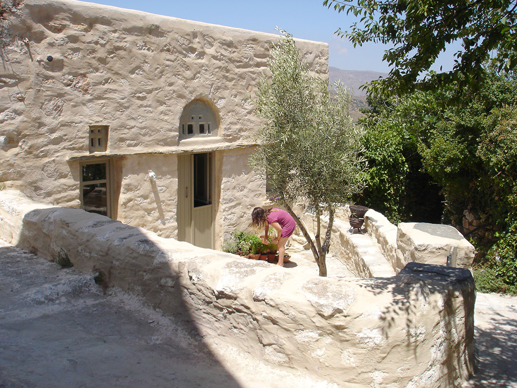 front-yard-olive-tree-loutra