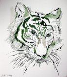 1-tiger-30-x-26-cm-tusche-auf-bc3bctten-c-zeichnung-von-susanne-haun