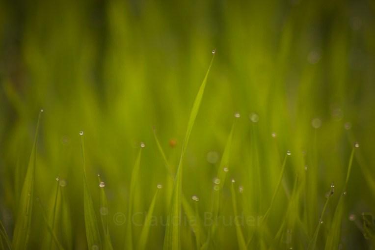 wet_grass_1