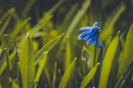 blau und grün_1