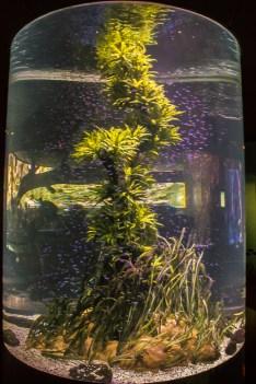 tube fishtank