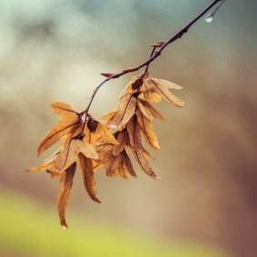 graceful_autumn_1
