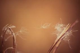 graceful_autumn_4
