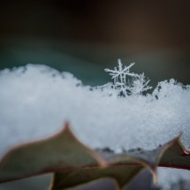graceful_winter_3
