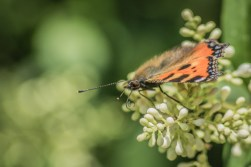 focus_butterfly_1