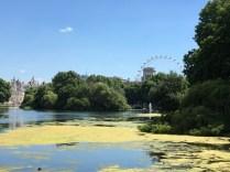 Damm i St James's Park med London Eye i bakgrunden.