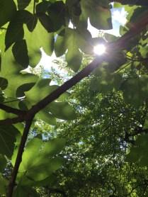 I skuggan under ett träd...