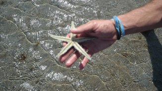 Picking up starfish at four mile beach