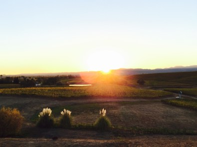Sunset over Vineyard at William Hill Estate Winery