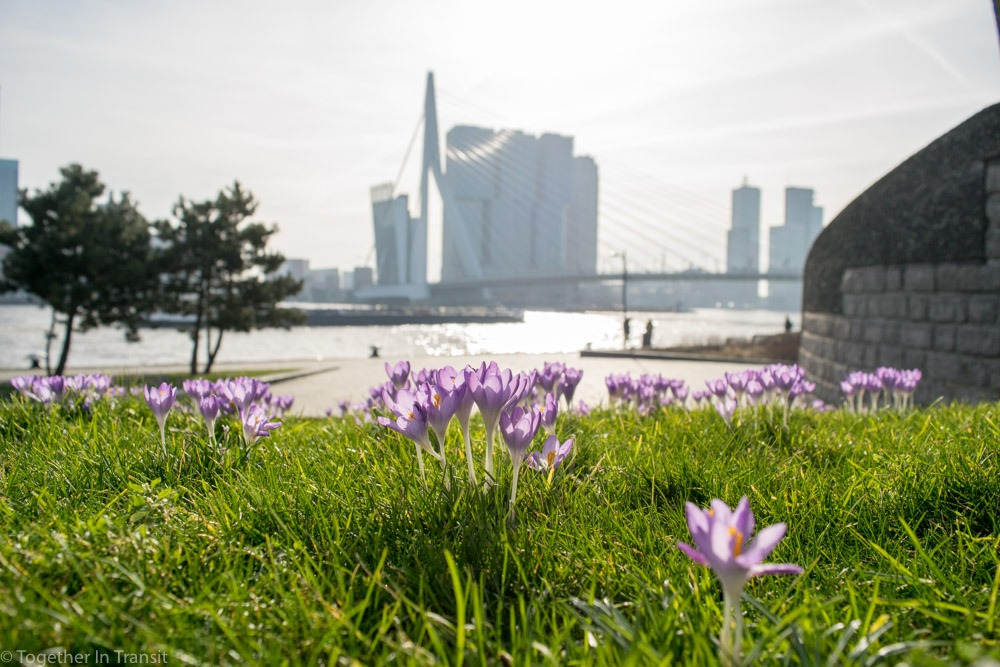 Rotterdam Spring Photo February 2019 taken by Togetherintransit.nl