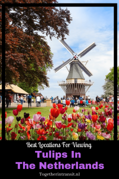There are many places to view Tulips In The Netherlands, which is why we wanted to share the top places with you! Keukenhof is the top location but cycling past tulip fields give you a truly beautiful experience too!