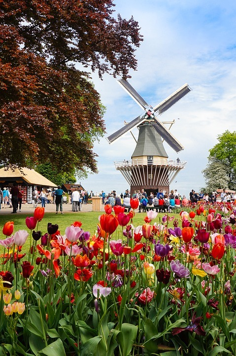 Tulips In The Netherlands - The pretty windmill at the Keukenhof near Lisse and Amsterdam