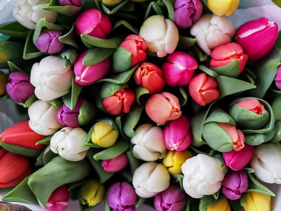 Tulips In The Netherlands - pretty colours of tulips you can buy on the market