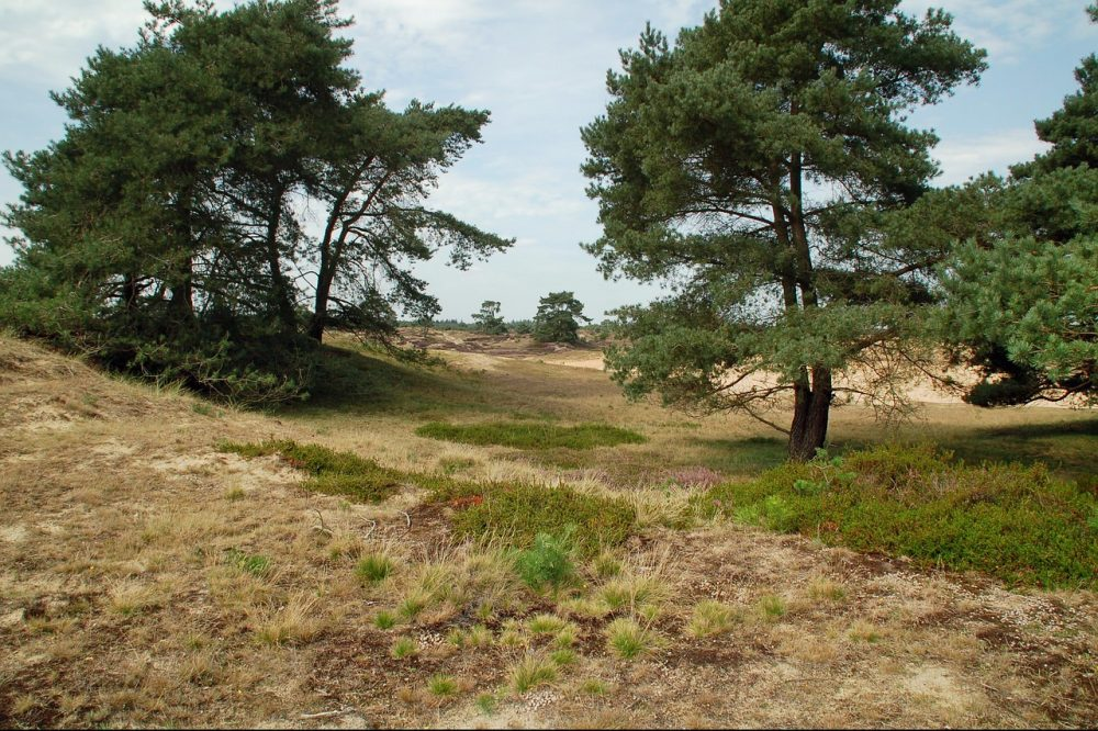 National Parks of the Netherlands - Drentse Aa