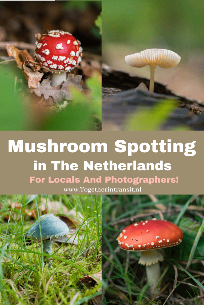 Mushroom Spotting in the Netherlands is such a popular thing to do and search for during Autumn, making it fun for locals and photographers! #mushroom #photography #autumn #autumnseason #fall #autumnmood #nature #mushroomphotograhy