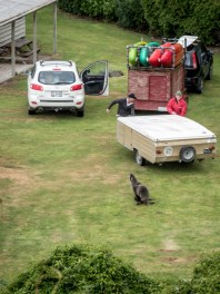 Seal overseeing the caravan being hooked up