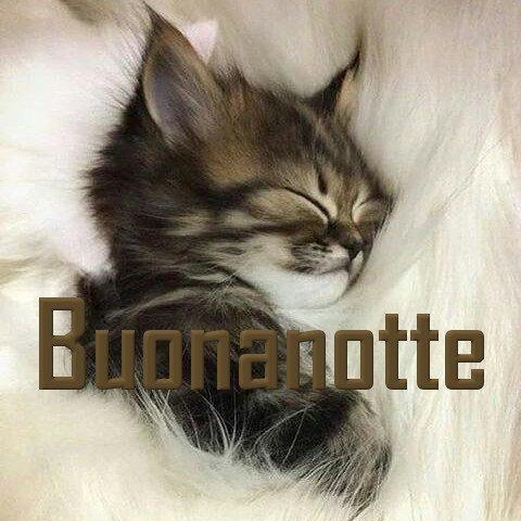 Buonanotte gatti nuove immagini gratis WhatsApp e Facebook