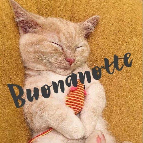 Buonanotte gatti, immagini nuove gratis whatsapp e facebook