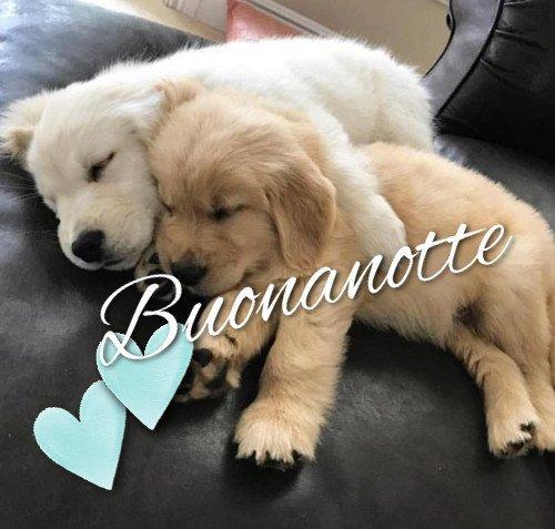 Buonanotte Immagini Nuove Cani Toghigi Paper