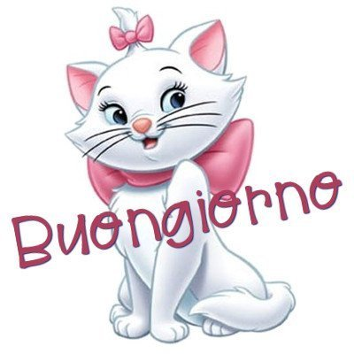 buongiorno gattina immagini nuove gratis whatsapp facebook