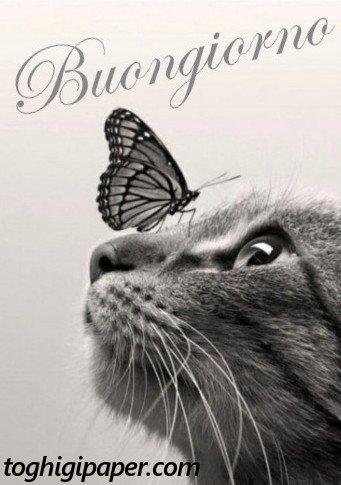 Buongiorno gatti belle e nuove immagini gratis WhatsApp