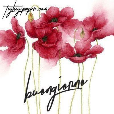 Buongiorno fiori belle e nuove immagini gratis WhatsApp