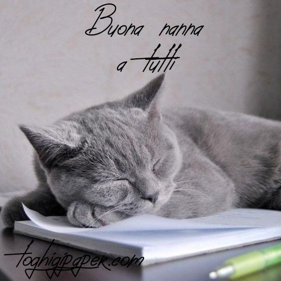 Buonanotte gatti immagini nuove gratis WhatsApp
