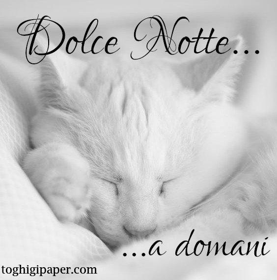buona notte gatti immagini nuove gratis WhatsApp Facebook bacionotte dolci sogni
