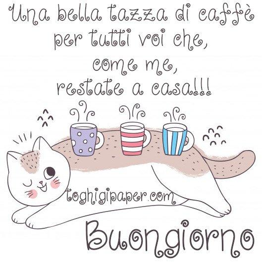 buongiorno gatto #iorestoacasa immagini nuove gratis whatsapp facebook