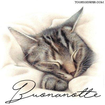 Gatti buonanotte immagini nuove gratis WhatsApp Facebook, Instagram, Pinterest, Twitter