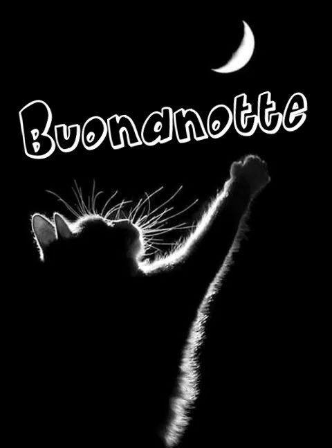 Gatti buonanotte immagini nuove gratis WhatsApp Facebook Instagram Pinterest