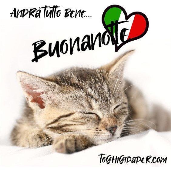 buonanotte gattini andrà tutto bene immagini gratis WhatsApp nuove bacionotte dolci sogni