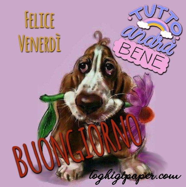 buongiorno buon venerdì immagini nuove gratis whatsapp facebook