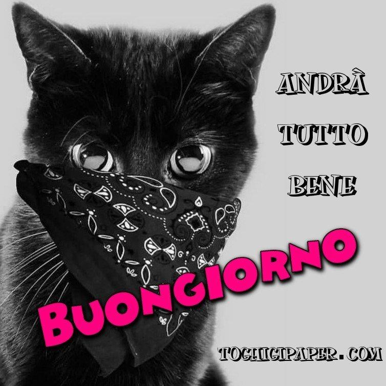 Buongiorno gattino, andrà tutto bene, immagini bellissime da scaricare gratis, per WhatsApp, Facebook, Instagram