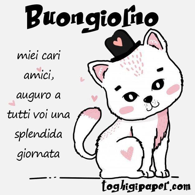 buongiorno gattini immagini nuove gratis whatsapp facebook