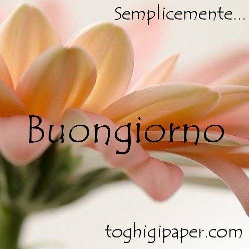 buongiorno fiori buona giornata immagini nuove gratis WhatsApp Facebook Instagram Pinterest Twitter