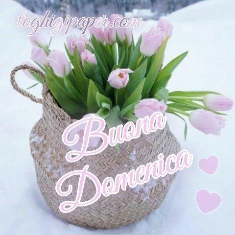 Domenica fiori inverno buongiorno immagini gratis nuove per WhatsApp, Facebook, Pinterest