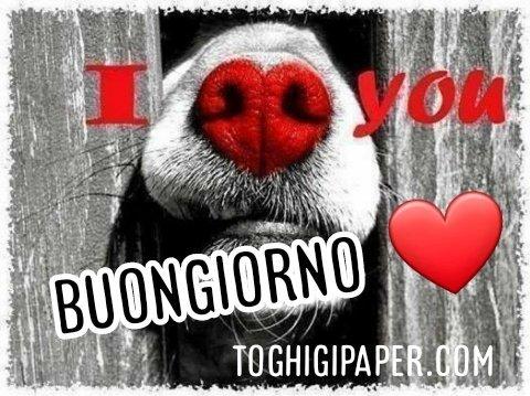 Buongiorno buona giornata i love you cane immagini gratis WhatsApp, Facebook belle e nuove