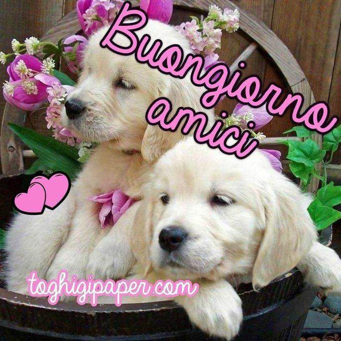 Buongiorno amici cani nuove e belle immagini gratis per WhatsApp, Facebook, Pinterest, Instagram, Twitter