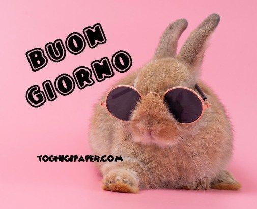 Pasqua Buongiorno nuove e belle immagini gratis per WhatsApp, Facebook, Pinterest, Instagram, Twitter