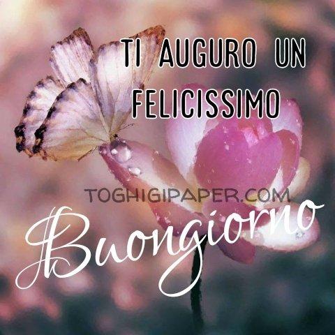 Fiore con farfalla buongiorno nuove e belle immagini gratis per WhatsApp, Facebook, Pinterest, Instagram, Twitter