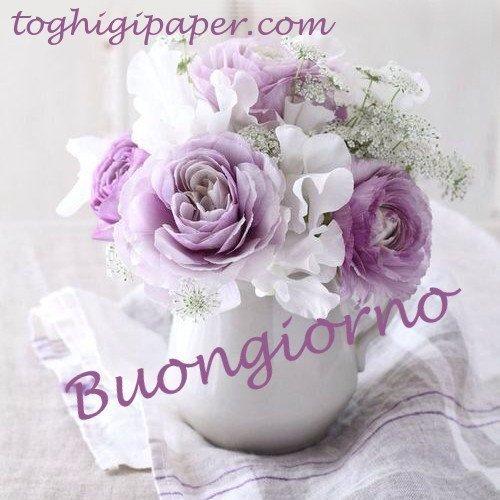 Fiori buongiorno nuove e belle immagini gratis per WhatsApp, Facebook, Pinterest, Instagram, Twitter