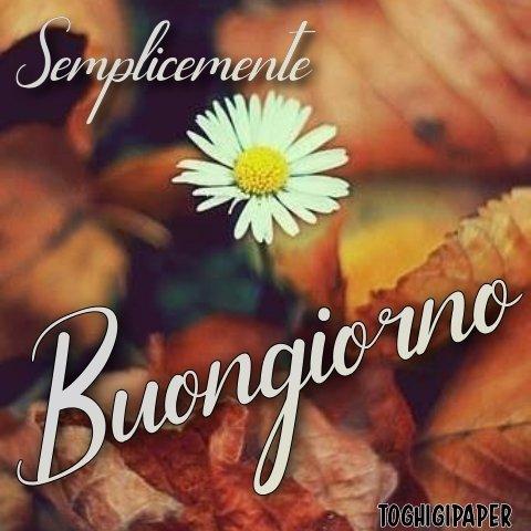 Fiori buongiorno autunno nuove e belle immagini gratis per WhatsApp, Facebook, Pinterest, Instagram, Twitter