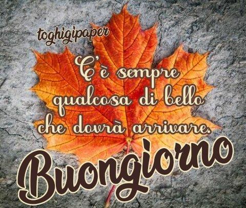 Frasi buongiorno autunno frasi belle immagini buona giornata buon giorno belle divertenti gratis WhatsApp Facebook nuove