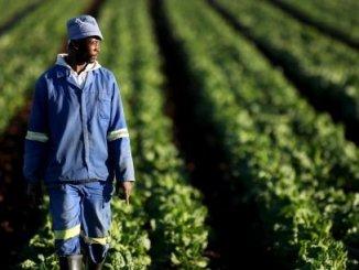 agriculteurs Agriculture: le Togo veut s'inspirer de la Corée du Sud