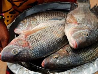 Poisson tilapia 1 Alerte : probables poissons empoisonnés en provenance du Bénin